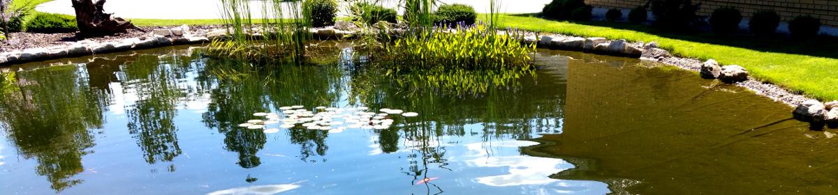 oczko wodne budowa projektowanie i utrzymanie oraz dobre rady