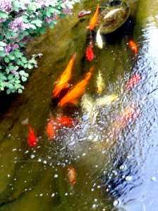 Karpie koi i inne ryby lubią kiedy woda jest należycie napowietrzona.