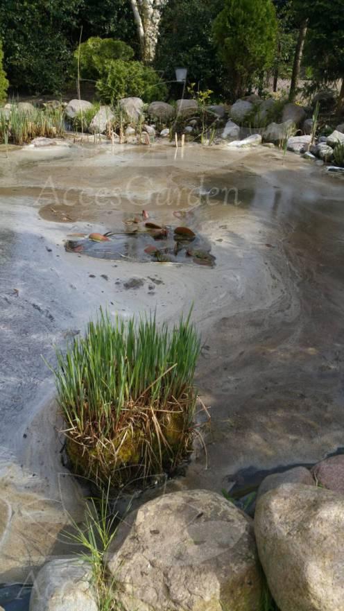 alog-direct-oase-likwidator-glonow-nitkowatych-posypujemy