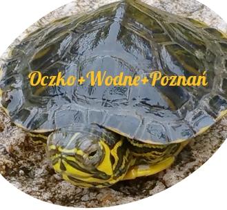 oase-oczko-wodne-polskie