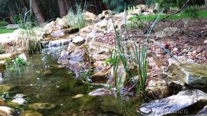 mięta wodna,mięta nadwodna,mentha aquatica